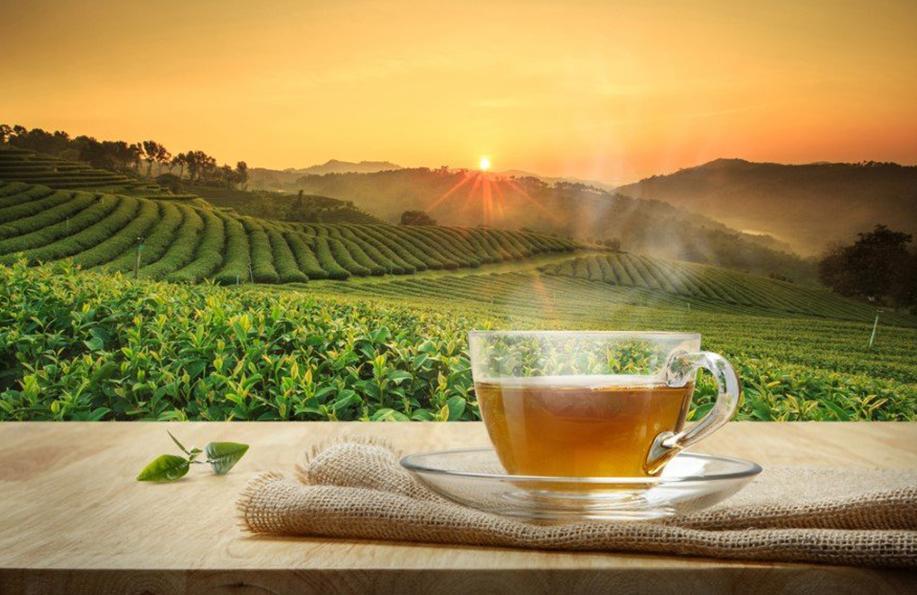kinoa çayı