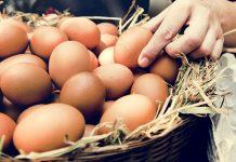 bayat yumurta nasıl anlaşılır
