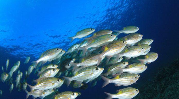 rüyada balık görmek