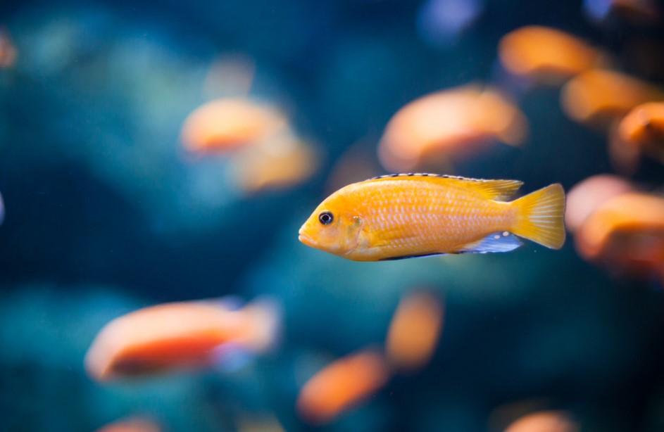 rüyada balık