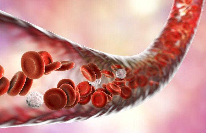 kan yapan besinler